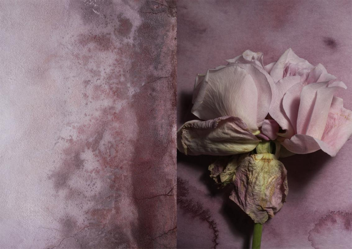Bloom Petal Palette