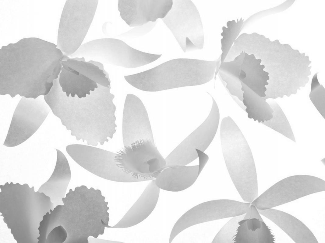 PaperOrchids / Personal work
